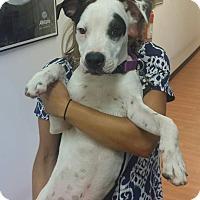 Adopt A Pet :: Aldo - Kill Devil Hills, NC