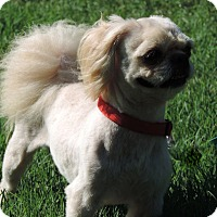 Adopt A Pet :: TEDDY - Anderson, SC