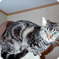 Adopt A Pet :: Fellina - North Wilkesboro, NC