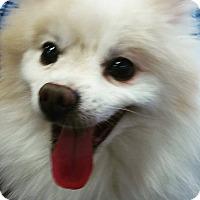 Adopt A Pet :: Maddox - Henderson, NV