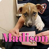 Adopt A Pet :: Madison - College Station, TX