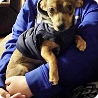 Adopt A Pet :: REX - Williamsport, PA