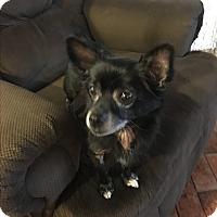 Adopt A Pet :: Blackberry - Lehigh, FL