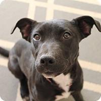 Adopt A Pet :: Simone - Dayton, OH