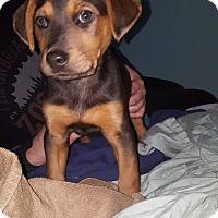 Adopt A Pet :: Tyler - Greenville, NC