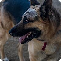 Adopt A Pet :: Hogen - Phoenix, AZ