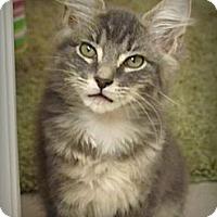 Adopt A Pet :: Smoky - Seminole, FL