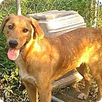 Adopt A Pet :: Brady ($100 off) - Brattleboro, VT