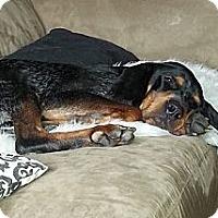 Adopt A Pet :: Lincoln - Hamilton, ON