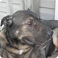 Adopt A Pet :: Tippi - Newport, VT