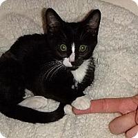 Adopt A Pet :: Daniella - Riverside, RI