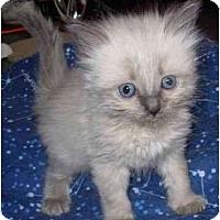 Adopt A Pet :: Tahlula Belle - Modesto, CA