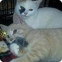 Adopt A Pet :: Danny Diveto - Harrisburg, NC
