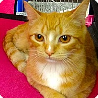 Adopt A Pet :: Sunset - Escondido, CA