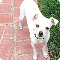 Adopt A Pet :: Heidi - Lake Elsinore, CA