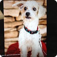 Adopt A Pet :: Punky - Scottsdale, AZ