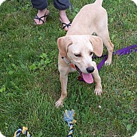 Adopt A Pet :: Scout - Richmond, VA