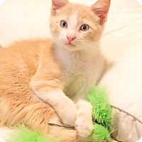 Adopt A Pet :: Finian J patrick - Chicago, IL