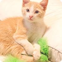 Adopt A Pet :: Finian J patrick - Chicago, IL