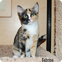 Adopt A Pet :: Sabrina - Buena Park, CA