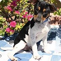 Adopt A Pet :: Genesis - Gilbert, AZ