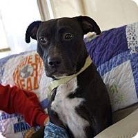 Adopt A Pet :: Pete - Dayton, OH