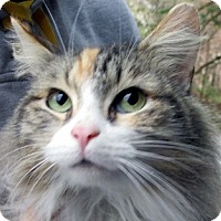 Adopt A Pet :: Tiffany - Germantown, MD