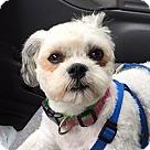 Adopt A Pet :: Pending! Walter