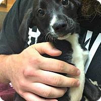 Adopt A Pet :: Jackson - Kimberton, PA