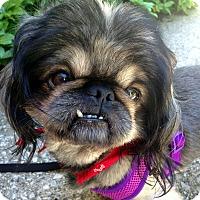 Adopt A Pet :: Hercules - Fennville, MI