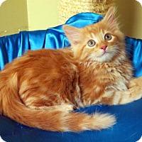 Adopt A Pet :: Marigold - St. Louis, MO
