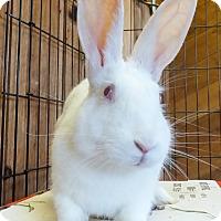 Adopt A Pet :: Paulie - Foster, RI
