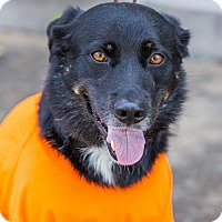 Adopt A Pet :: Casey Lee - Buffalo, NY