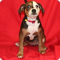 Adopt A Pet :: Rilla - Umatilla, FL