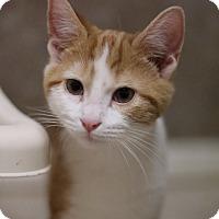 Adopt A Pet :: Steven - Hartselle, AL