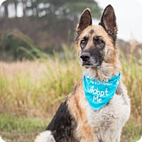 Adopt A Pet :: Miss Jet - Pacific Grove, CA