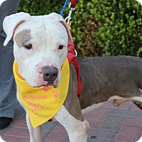 Adopt A Pet :: MJ - Las Vegas, NV