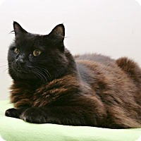Adopt A Pet :: Harley - Bellingham, WA
