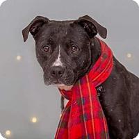 Adopt A Pet :: Amigo - Flint, MI