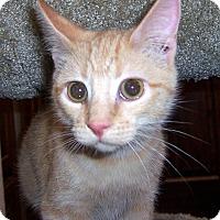 Adopt A Pet :: Brody - Oklahoma City, OK