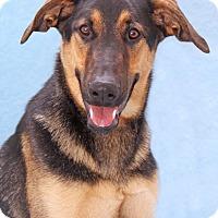 Adopt A Pet :: Fleetwood - Encinitas, CA