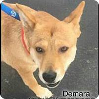 Adopt A Pet :: Demara - Simi Valley, CA