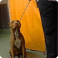 Adopt A Pet :: Audrey URGENT - San Diego, CA