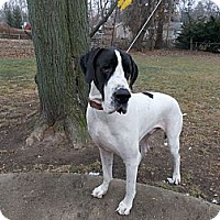 Adopt A Pet :: Colt - West Bloomfield, MI