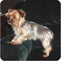 Adopt A Pet :: Nikki - Mooy, AL