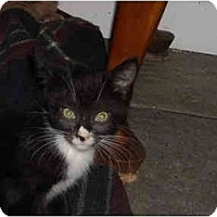 Adopt A Pet :: Jonas - Riverside, RI