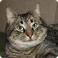 Adopt A Pet :: Miller (LE) - Little Falls, NJ