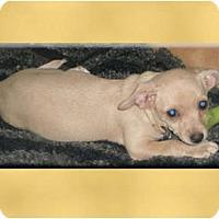 Adopt A Pet :: Blanca - Scottsdale, AZ