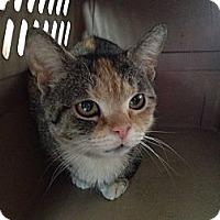 Adopt A Pet :: Amy - East Hanover, NJ