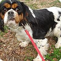 Adopt A Pet :: TRUDY - ROCKMART, GA